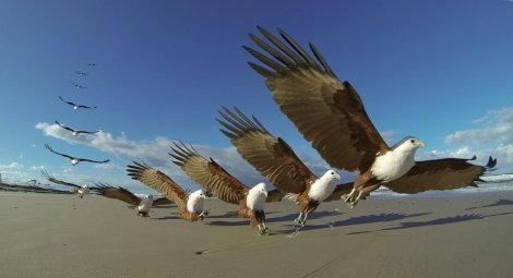 Birds Karumba Point Sunset Caravan Park Holidays Accommodation Hotels